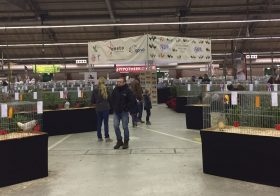 Duifhuizen en Bosma Europees Kampioen Europashow 2018