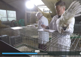 Video: Lakenvelder Blauw