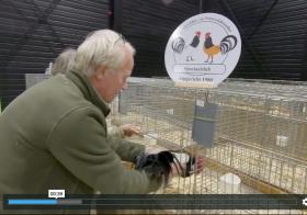 Video: Tentoonstellingen